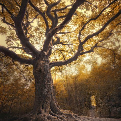 Heksenboom Bladel