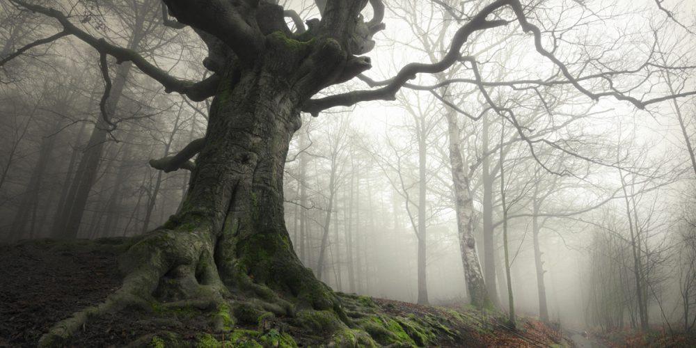 Heksenboom