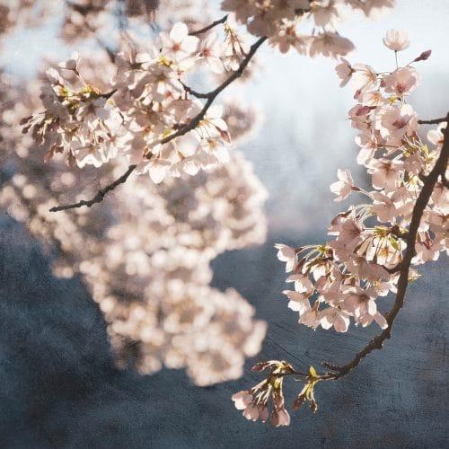 Painterly spring blossom